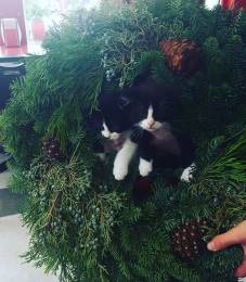 wreath-kittens